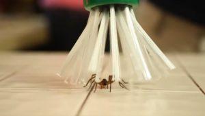 Spinnenfänger